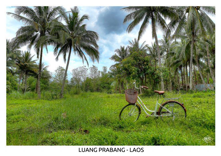 Landscape017